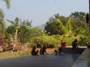 猿と昼休み